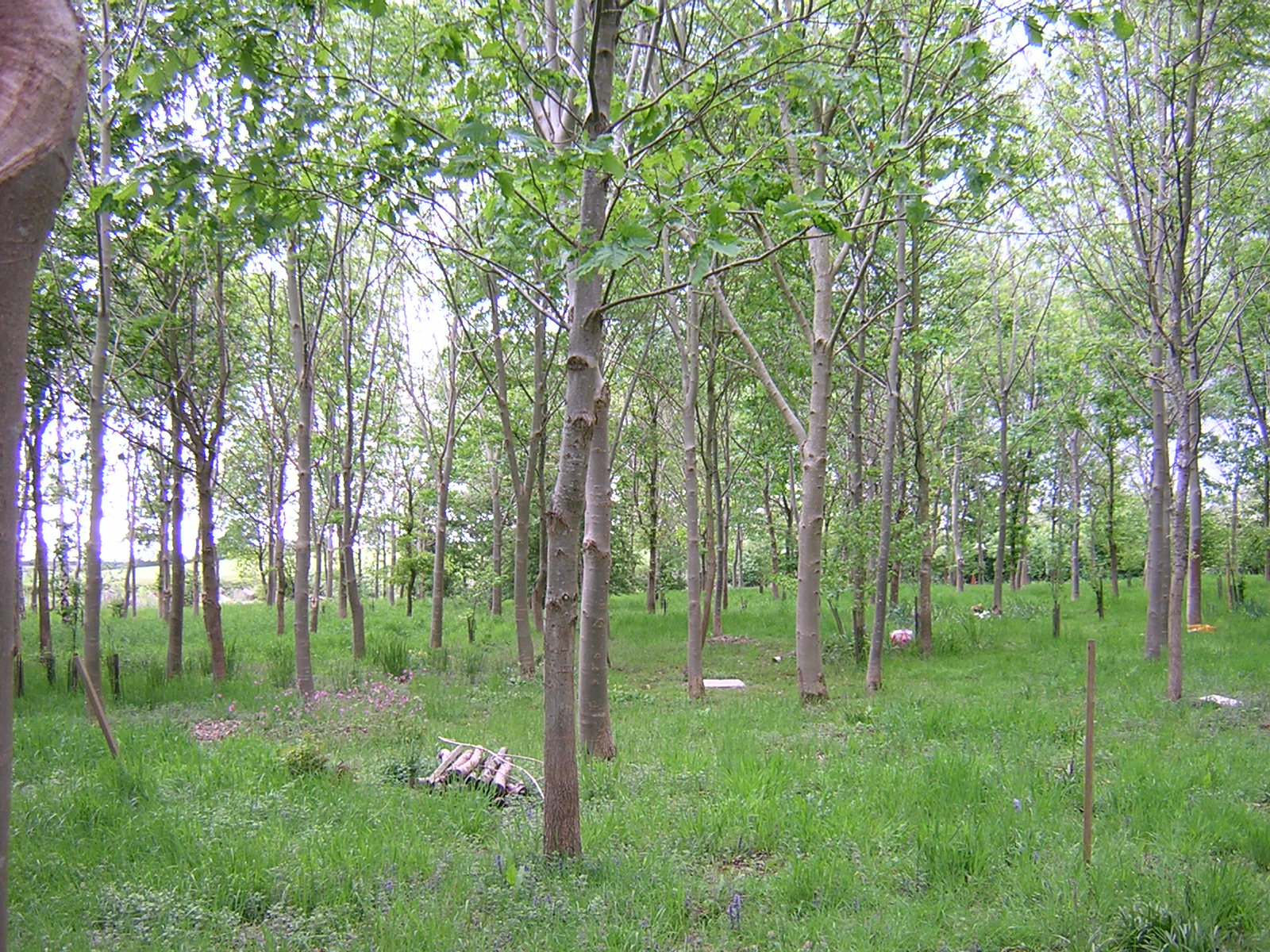 Where To Go The Natural Burial Company USA - Conservation cemetery map us