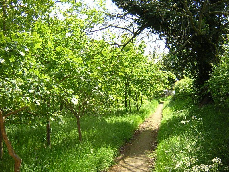 Carlisle_woodland