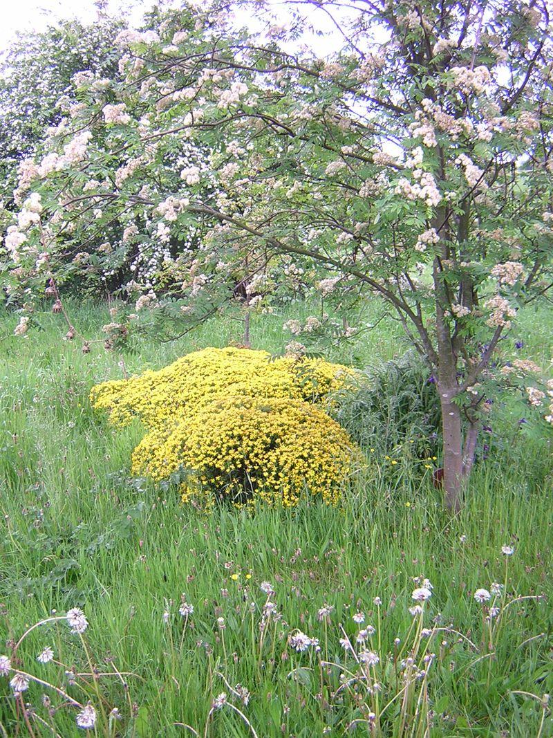 Yorkshire_flower_mound