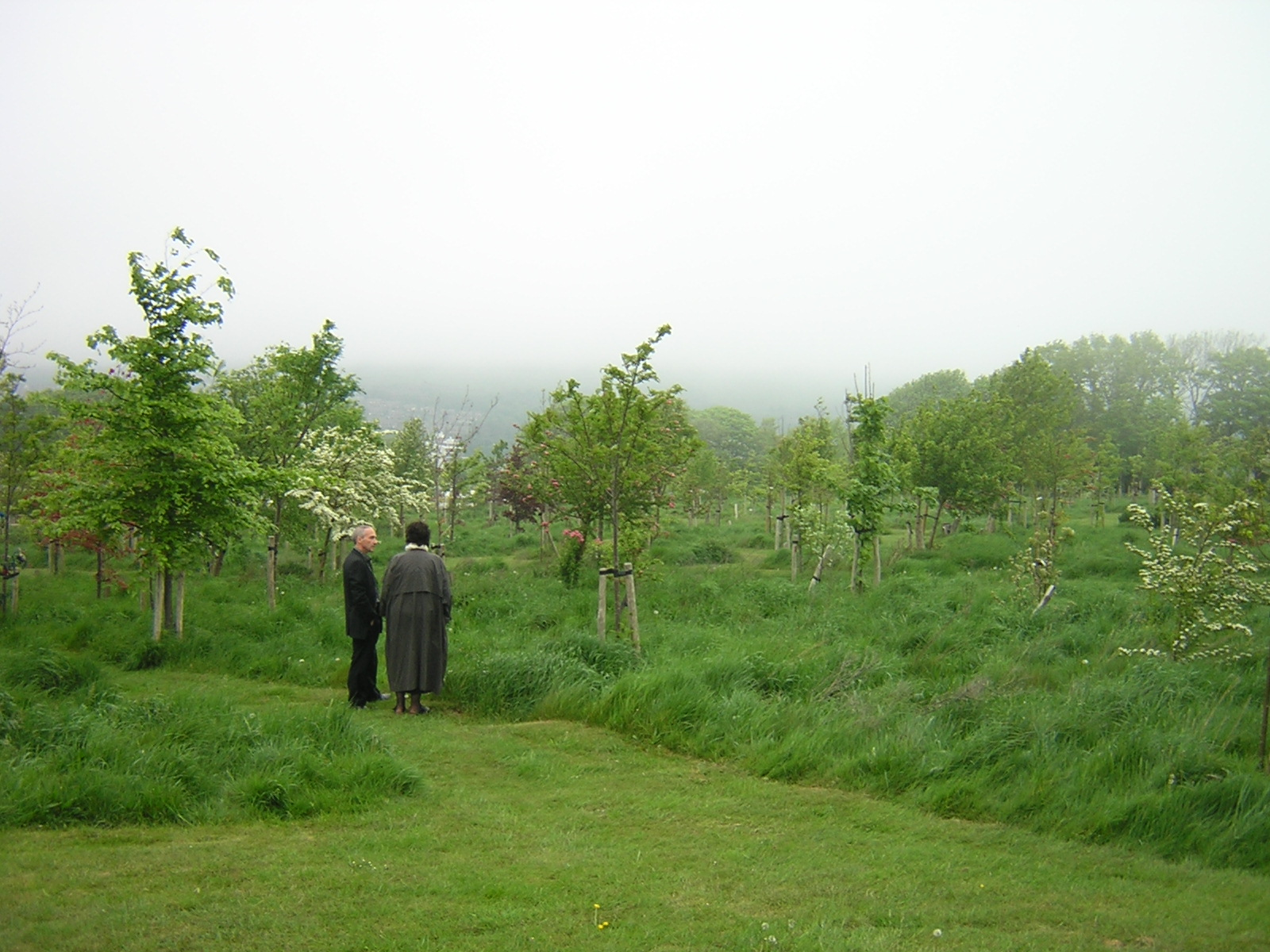Be a tree the natural burial guide for turning yourself into a woodvales conventional cemetery conversion in brighton hove solutioingenieria Images